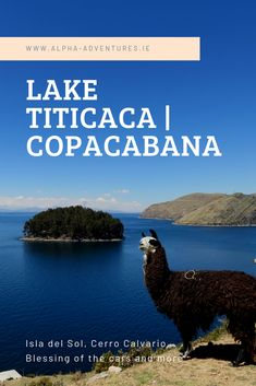 Travel guide detailing everything to do on Bolivia's Lake Titicaca. From Isla del Sol, to Cerro Calvario and the blessing of the cars, Copacabana will not disappoint. Bolivia, Budget Travel, Travel Guide, Lake Titicaca, South America, Backpacking, Blessed, Adventure, Islands