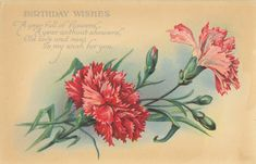Red and pink carnations and buds. Birthday postcard.
