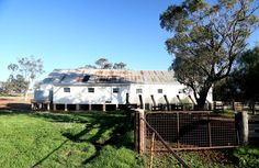 The sheep's last view of the woolshed after coming down the chute