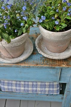 clay pots of forget-me-nots