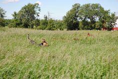 Fun in the sun! Doberman Shepherd, Sun, Dogs, Pictures, Photos, Pet Dogs, Photo Illustration, Doggies, Dog