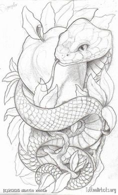 Like the symbolism. Lots of snake and apple tattoos have an angry looking snake. for men ✌ Like the symbolism. Lots of snake and apple tattoos have an angry looking snake. for men ✌ Tattoo Sketches, Tattoo Drawings, Body Art Tattoos, Art Sketches, Art Drawings, Drawings Of Snakes, Calf Tattoos, Snake Drawing, Snake Art