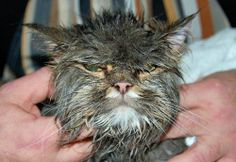 Wet cats (6 photos)