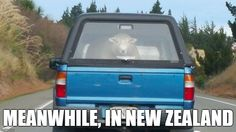 Meanwhile, In New Zealand.