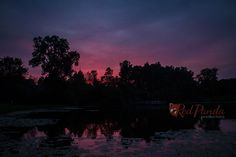 The Sunset's warm colors light up the summer sky in Michigan. Perfect nature setting with reflections from a pond.