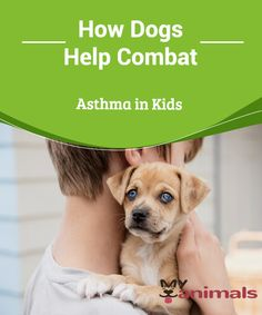 Dogs help combat asthma in kids  In a study conducted by the American Society for Microbiology, it's been shown that there's a link between having a dog in the house and a decreased likelihood of family members having asthma, as well as an improvement for those suffering from this condition.