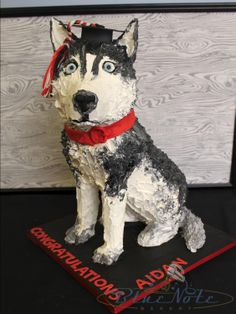 Northeastern University Husky graduation cake | Blue Note Bakery - Austin, Texas This is so awesome!