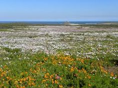 Image result for skilpad namaqua national park Tourism, National Parks, Mountains, Beach, Water, Travel, Outdoor, Image, Water Water