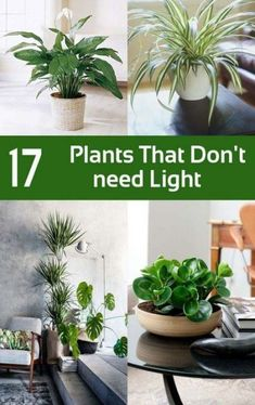 inside plants that don't need sun - 235×374