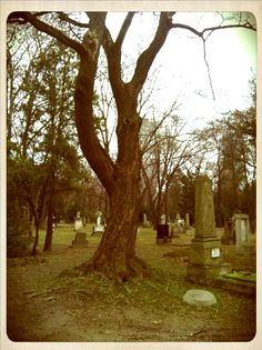 Ondrejs` cemetery Cemetery, Plants, Plant, Planets