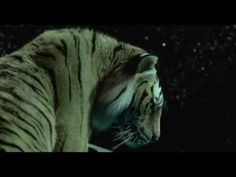 Couch Potato... Life of Pi Trailer #Movie The trailer alone made me cry.