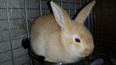 7 Best Infinity Acres Pets For Sale Images Pets For Sale
