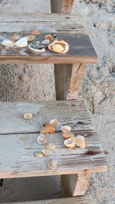 Seashells | La Beℓℓe ℳystère