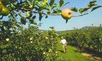 WaPo Best local places for apple picking.