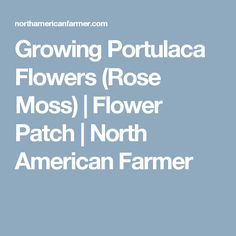 Growing Portulaca Flowers (Rose Moss) | Flower Patch | North American Farmer
