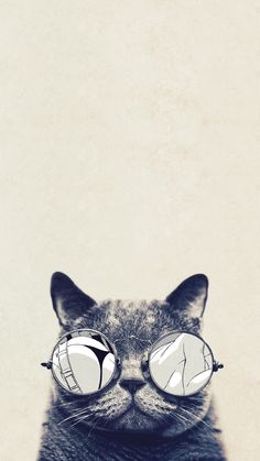 1080x1920 Cool Cat Glasses Android Wallpaper ...