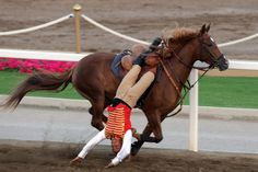 From CNN - An Omani Equestrian demonstrates his skills during the annual Royal Horse Racing Festival in Muscat, Oman.