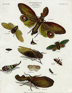 Rees Cyclopedia Antique Prints