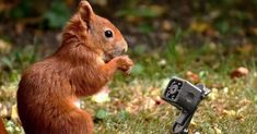 Digital Foto, Itunes, Snapchat, Bra, Animals, Movie, Animales, Animaux, Bra Tops