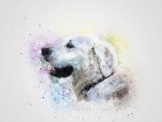 Dog, Pet, White, Art, Abstract