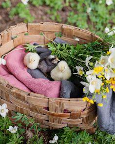 """4,006 To se mi líbí, 29 komentářů – allthebeautifulthings (@allthebeautifulthingsblog) na Instagramu: """"#allthebeautifulthings #morning #goodmorning #summer #june #flowers #chic #chicken #countryside…"""""""