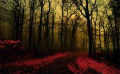 Dawn Forest Wallpaper