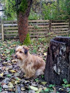 autor: jlez, Poland (tytuł: Natura 9005 - jesień, sad, liście i pies)