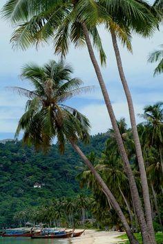 a_Koh-phi-phi-islands- TAILANDIA