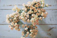 i love flowers! My Flower, Beautiful Flowers, Flower Bomb, Ikebana, Pink Roses, Flower Arrangements, Floral Design, Floral Wreath, Bouquets