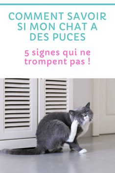Signs, Dog, All About Cats, Fleas, Cats And Kittens, Deceit, Animaux, Cats, Diy Dog