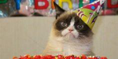 Increíble: el mundo celebra el cumpleaños del gato enojado más famoso