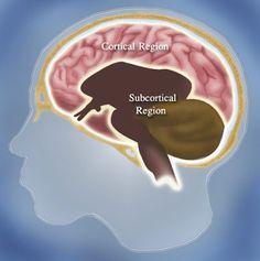 Ghid de diagnostic in demente - Camin de batrani - Casa Lili Huntington Disease, White Matter, Brain Anatomy, Dementia, Health And Wellbeing, Disorders, Science, Learning, Tuesday