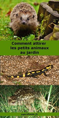 Jardiner pour la vie sauvage - Esprit Laïta - Rebel Without Applause Fun Facts About Animals, Animal Facts, Autumn Garden, Easy Garden, Diy Jardim, Potager Bio, Garden Online, Home Grown Vegetables, Permaculture Design