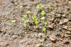How to Grow Succulents From Seed