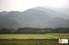 Korea_Pyungsary field(평사리들판)