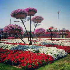 Dubai Miracle Garden. Photography: Abdulla Al-Buqaish