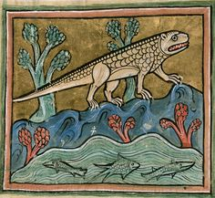 Crocodile, English Bestiary (Royal 12 F), author unknown, 13th century, housed at the British Library.