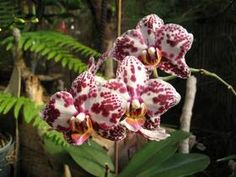 The orchid is a versatile flower, one with the most varieties - there  are about 30,000 of them! We can always learn something from orchids and nature.