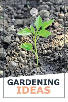 Soil fertility is not just a matter of dumping organic matter onto the top of the soil, but adding the right soil amendments to allow the nutrients to be released. The ideal soil is both porous, and retains water, doesn't erode in a rain storm, doesn't puddle, and yet provides enough support for the roots to anchor into. #gardeningsoil #gardeningtips #plantcare Flower Gardening, Garden Soil, Organic Gardening, Vertical Garden Plants, Shade Garden Plants, Small Succulents, Succulents Garden, Gardening For Beginners, Gardening Tips
