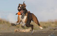 Perfectly Timed Photos  Quaranta scatti che colgono l'attimo fuggente nel mondo animale