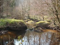 one of the beautiful pools in Huelgoat Forest