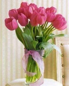 Beautiful rosy pink tulips