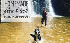Want to protect your dog from fleas and ticks without using harmful chemicals? Use our Homemade Flea and Tick Prevention for Dogs recipe. Natural Flea Remedies, Essential Oils For Fleas, Horse Care Tips, Dog Nutrition, Flea And Tick, Medium Dogs, Boxer Dogs, Ticks, Exotic Pets