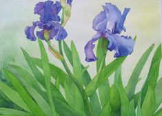 Suzanne Hull Wilson    WATERCOLOR