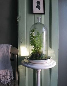 Who says your windowless cubicle or office can't sustain plants.  Check out these 5 plants that would be great for an office terrarium.
