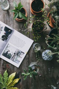Luscious jungles and home oases - - Plant Flatlay. Luscious jungles and home oases Plant Flatlay. Luscious jungles and home oases Plant Flatlay. Luscious jungles and home oases Diy Nature, Composition Photo, Photo Pour Instagram, Instagram Images, Instagram Inspiration, Plant Aesthetic, Cosy Aesthetic, Aesthetic Design, Modern Design