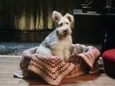 """Snubby, who played Bob in an Inspector Poirot episode, """"Dumb Witness""""  Love the curly dog and Crochet"""