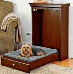 Pet Murphy Bed. What a great idea!