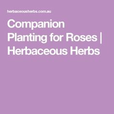 Companion Planting for Roses | Herbaceous Herbs
