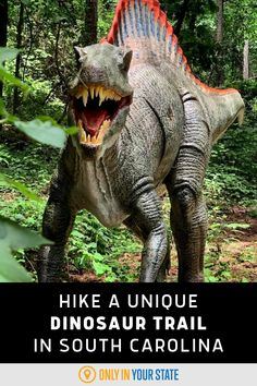 Take a unique and family-friendly hike along this fun and easy dinosaur trail in South Carolina. Best Bucket List, Hidden Beach, Swimming Holes, Summer Travel, Natural Wonders, South Carolina, State Parks, Travel Destinations, Trail